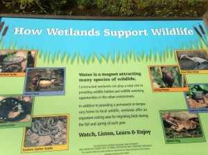 Some information about the wetlands