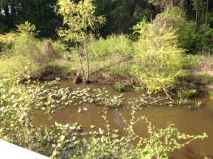 Here is a stop about 3 miles into my ride. It's a man made wetland where you can see turtles, frogs and an occasional heron.